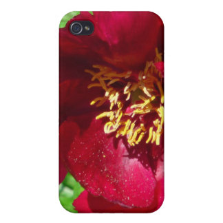 Red Flower iPhone4 Case iPhone 4/4S Case