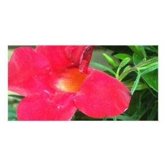 red flower custom photo card