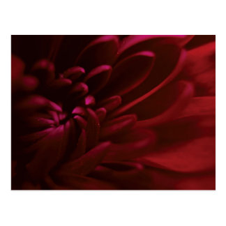 Red Flower Photography Postcard