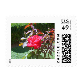 Red Flower Postage Stamp