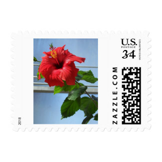 Red flower postage stamps