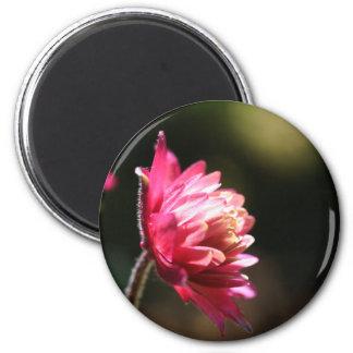 Red Flower Sunlight Floral Magnet