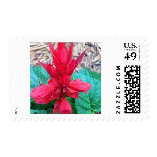 Red Flower USPS Postage Stamp