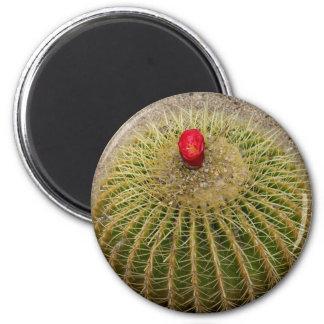 Red Flowering Cactus 6 Cm Round Magnet