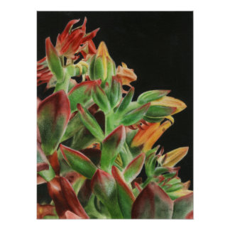 Red Flowering Succulent Poster