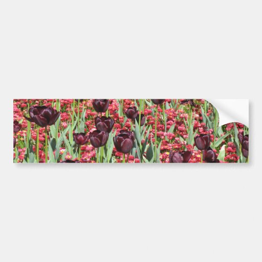 Red Flowers and dark tulips Bumper Stickers