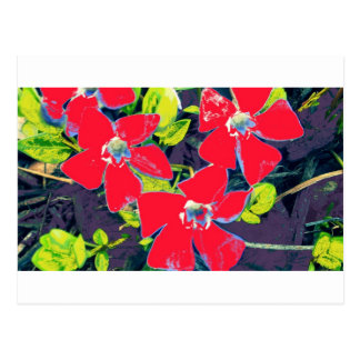 Red Flowers Postcard