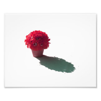 Red Flowers White Bucket and Shadow Photo Print