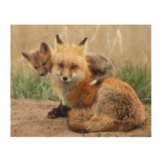 Red Fox And Baby Wood Print