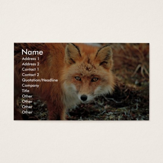 Red Fox at Cape Newenham Business Card