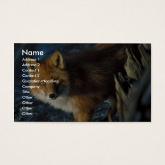 Red Fox at Shipwreck Courtney Ford Business Card