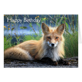Red fox beautiful photo custom birthday card