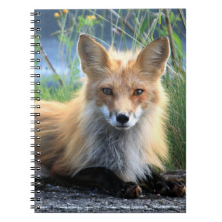 Red fox beautiful photo portrait notebook