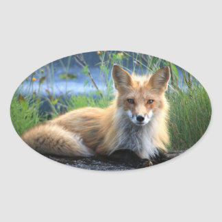 Red fox beautiful photo portrait stickers, gift oval sticker