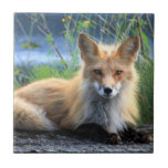 Red fox beautiful photo portrait tile, trivet gift