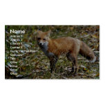 Red Fox Double-Sided Standard Business Cards (Pack Of 100)
