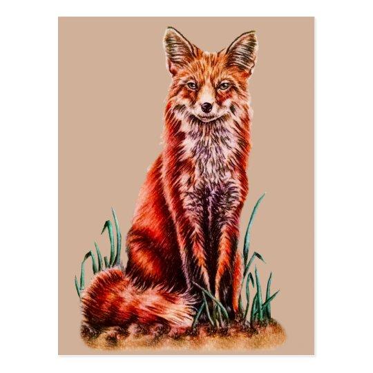 Red Fox Drawing Animal Art Pencil Sketch Foxy Postcard