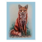 Red Fox Drawing Animal Art Pencil Sketch Postcard