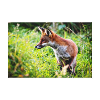 Red Fox Hunting Gallery Wrapped Canvas