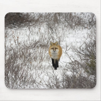 Red Fox in Churchill Manitoba Canada Mouse Mat