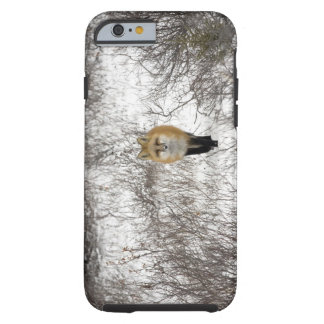 Red Fox in Churchill Manitoba Canada Tough iPhone 6 Case