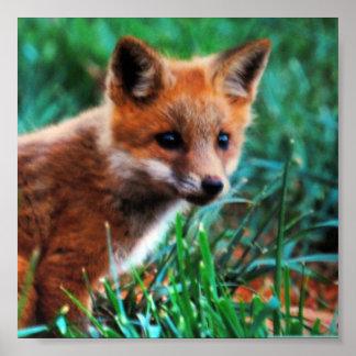 Red fox in natural habitat print