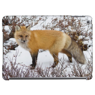 Red Fox in snow in winter