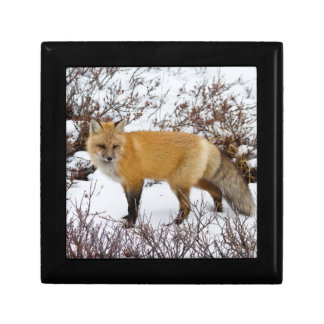 Red Fox in snow in winter Gift Box