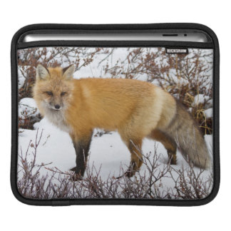Red Fox in snow in winter iPad Sleeve