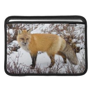 Red Fox in snow in winter MacBook Sleeves