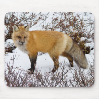 Red Fox in snow in winter Mouse Mat