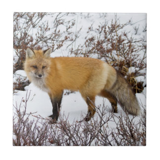 Red Fox in snow in winter Tile