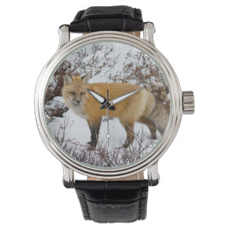Red Fox in snow in winter Watches