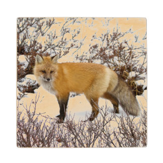 Red Fox in snow in winter Wood Coaster