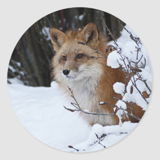 Red Fox in the Snow Round Sticker