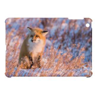 Red Fox in winter Churchill Wildlife Case For The iPad Mini