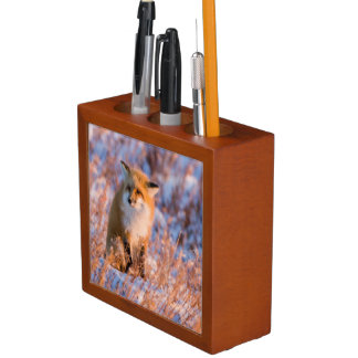 Red Fox in winter Churchill Wildlife Desk Organiser