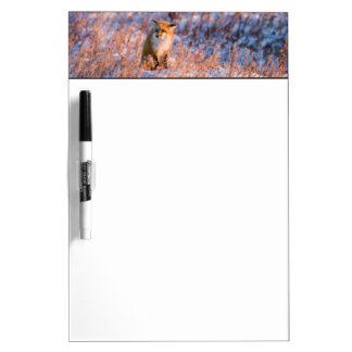 Red Fox in winter Churchill Wildlife Dry Erase Board