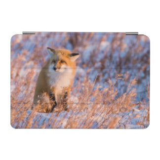 Red Fox in winter Churchill Wildlife iPad Mini Cover
