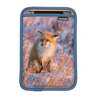 Red Fox in winter Churchill Wildlife iPad Mini Sleeve