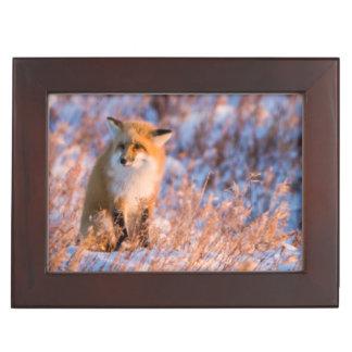 Red Fox in winter Churchill Wildlife Keepsake Box