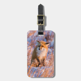 Red Fox in winter Churchill Wildlife Luggage Tag
