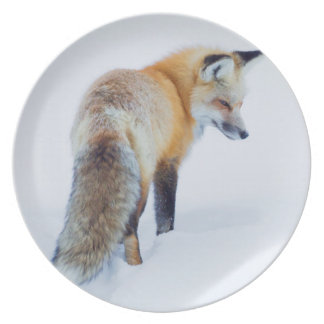 Red Fox in Winter Plate