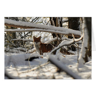Red fox in winter wood Christmas card