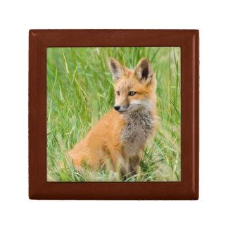 Red Fox Kit in grass near den Gift Box