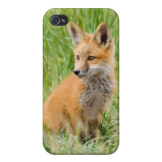 Red Fox Kit in grass near den iPhone 4/4S Case