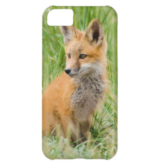 Red Fox Kit in grass near den iPhone 5C Case