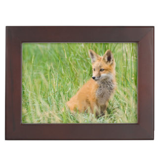 Red Fox Kit in grass near den Keepsake Box