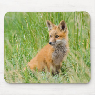 Red Fox Kit in grass near den Mouse Pad