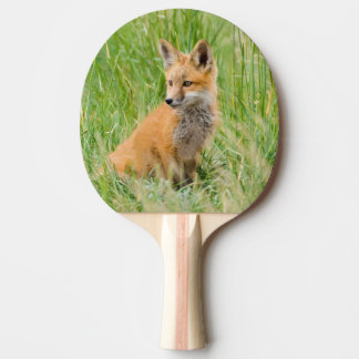 Red Fox Kit in grass near den Ping Pong Paddle